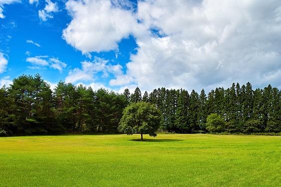 tree_woods_00003_s